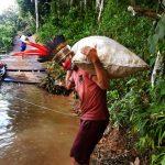 Indígenas do rio Nhamundá vendem castanhas-do-brasil com manejo sustentável